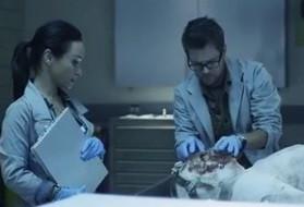 SNE2 morgue